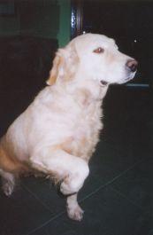 Memberikan Panduan & Saran Bagaimana Cara Merawat Anjing Yang Baik